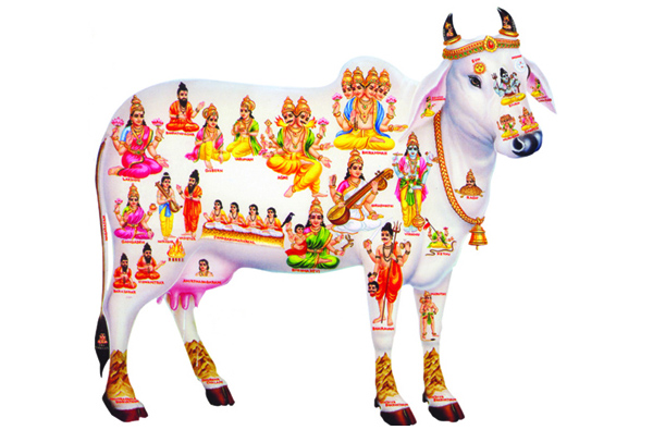 Hindus Demand Immediate Ban On Cow Slaughter Cow Is