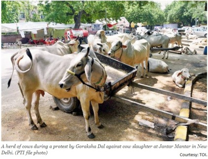 Save Cow Protest