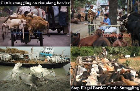 Stop illegal Cattle Smuggling