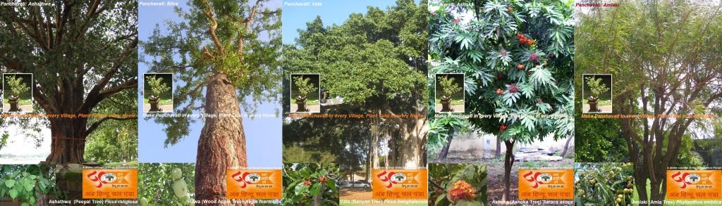 Tulsi-Panchavati-Divine-Project