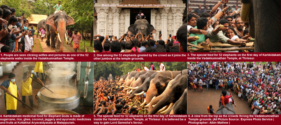 Elephants feast as Ramayana month begins in Kerala