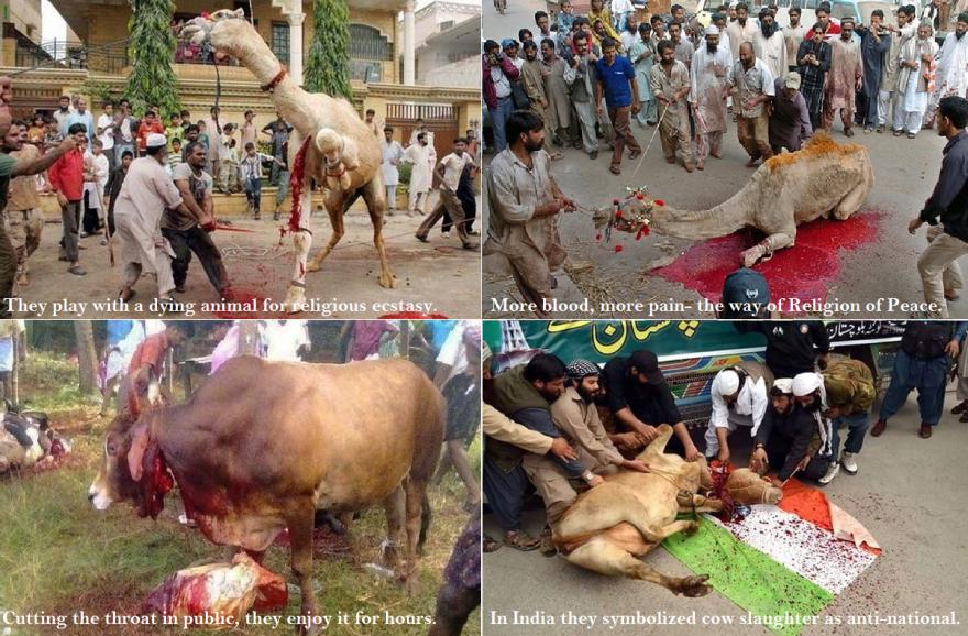 Cruel animal slaughter in India.