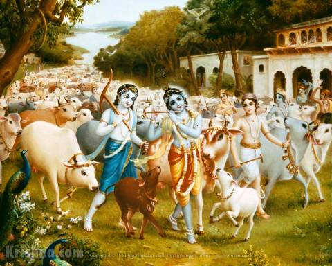 Krishna, Balaram tend the cows