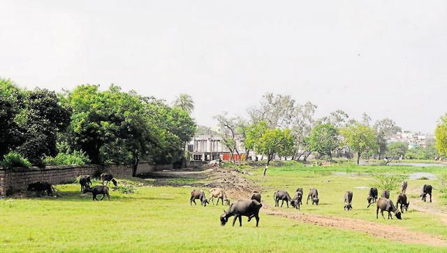 The proposed site for the new slaughter house in Bhopal on Monday.. (Hindustan Times/HT photo)