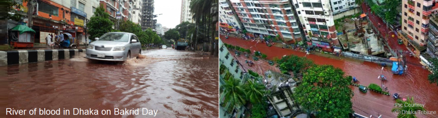 river-of-blood-in-dhaka-on-bakrid-day
