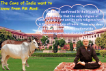 the-cows-of-india-want-know-from-pm-modi