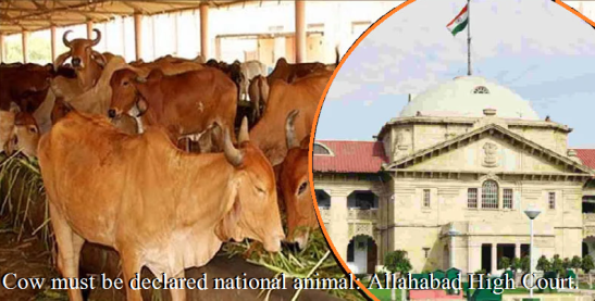 Cow must be declared national animal